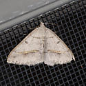 Dark-bordered Granite - Digrammia neptaria