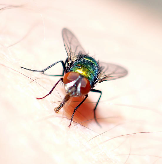 I Feed a Fly