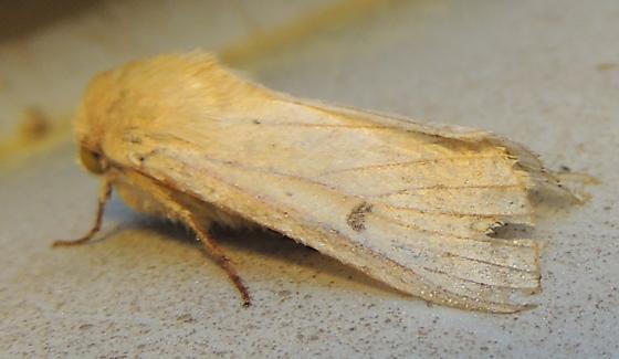 Unk Noct. moth