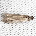 Pyralid Moth - Hodges #5946.2 - Phycitodes reliquellum