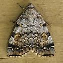 Moth-10 - Idia americalis