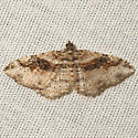 Bent-line Carpet Moth - Hodges #7416 - Costaconvexa centrostrigaria - female