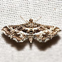 Crambid Snout Moth - Hodges #5171 - Diasemiopsis leodocusalis