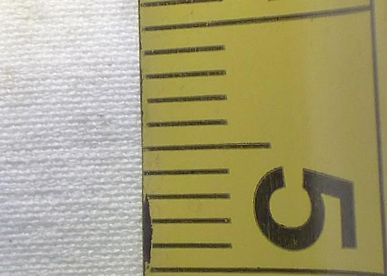 Tmarus angulatus ? - Tmarus