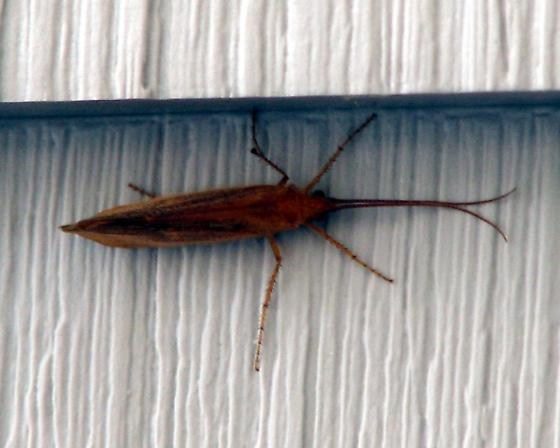 Long Skinny Bug