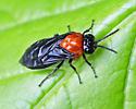 black-headed Ash Sawfly (Tethida barda) - Tethida barda
