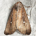 White-dotted Groundling - Hodges#9690 - Condica videns