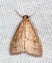 5079, Udea rubigalis, Celery Leaftier - Udea rubigalis