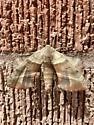 sphynx     maybe walnut sphynx? - Amorpha juglandis