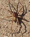 Spider found
