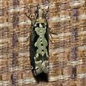 Moth 2011.02.24.0025 - Chimoptesis pennsylvaniana