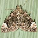 Dark Marbled Carpet Moth - Dysstroma citrata