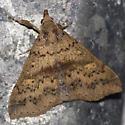 Discolored Renia Moth - Hodges #8381 - Renia discoloralis