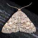 Unidentified Moth - Idia aemula