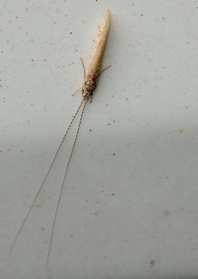 Moth/Fly?