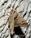 Moth - Phoberia