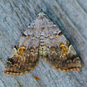 Moth ID - Idia americalis