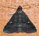 Smoky Tetanolita? Can anyone confirm this ID? - Tetanolita mynesalis
