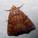 Perigea xanthioides