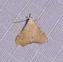 White-spotted Redectis - Hodges#8401 - Redectis vitrea