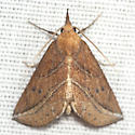 Curve-lined Owlet Moth - Hodges #8525 - Phyprosopus callitrichoides