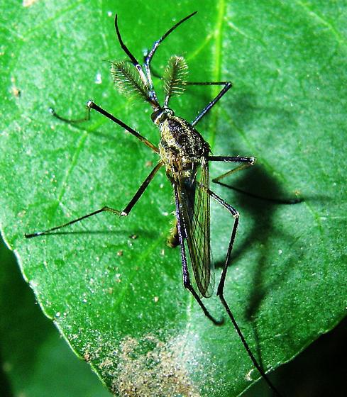 farmapest sinek resimleri ile ilgili görsel sonucu