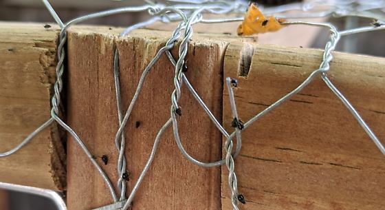 Spider Beetle (?) on chicken coop