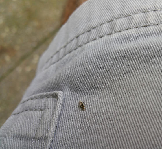 Tiny Insect