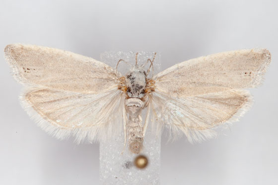 Micro Moth H