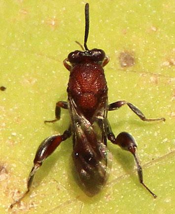 Wasp July 4