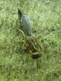 Tiny Wasp (?)