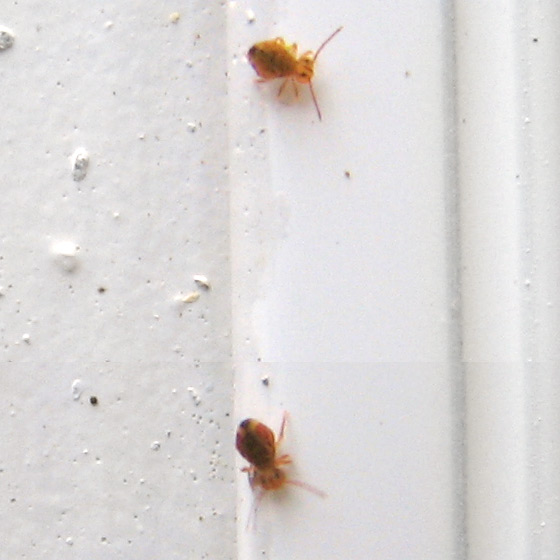 Hundreds of little bugs (beetles?) around door...