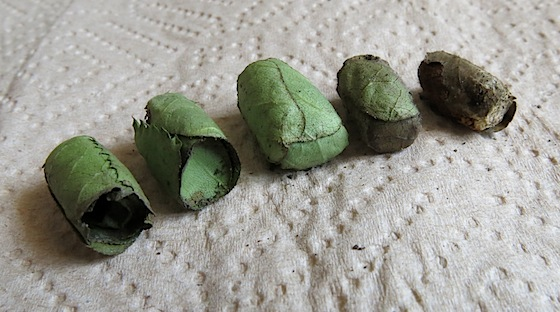 Leafcutter Bee Egg Packets
