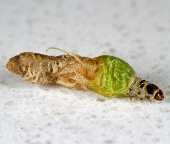 Unknown Bug