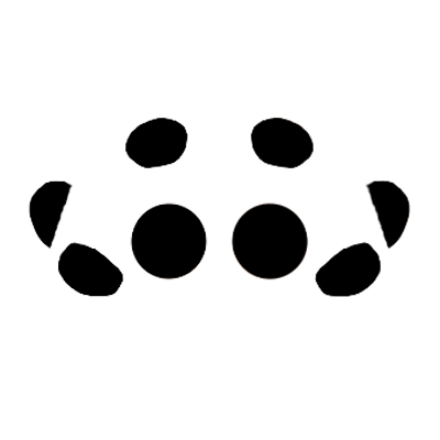 Hobo Eye Arrangement - Eratigena agrestis