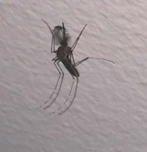 Mystery bug 2