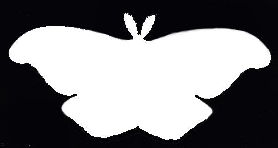 Giant Silkworm and Royal Moth Silhouette