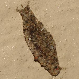 Household Casebearer - Hodges #0390 - Phereoeca uterella