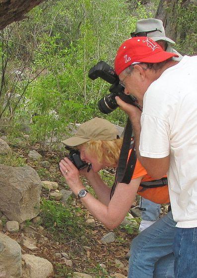 Tiger rattlesnake photo shoot