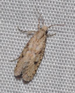 Moth 10.30.1