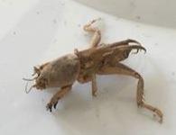 Strange Bug found in Garage
