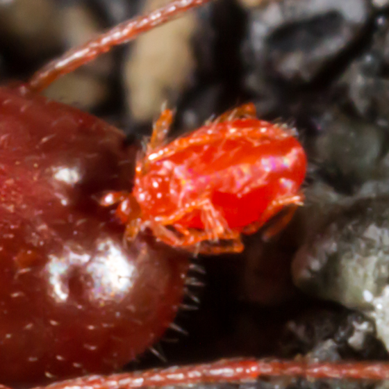 Mite with a mite