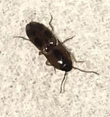 Bug found on brand new mattress