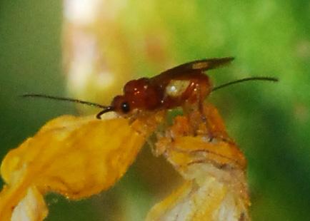UCI wasp #1