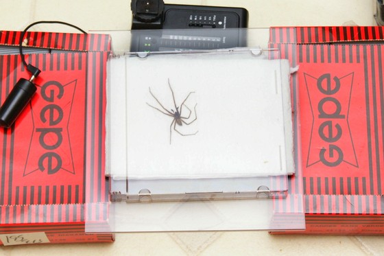 Spider palp setup