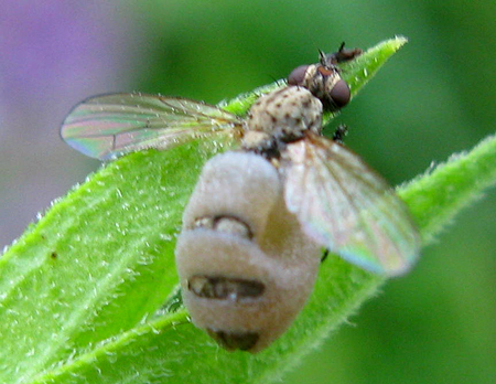 Fly -- what's happening here?