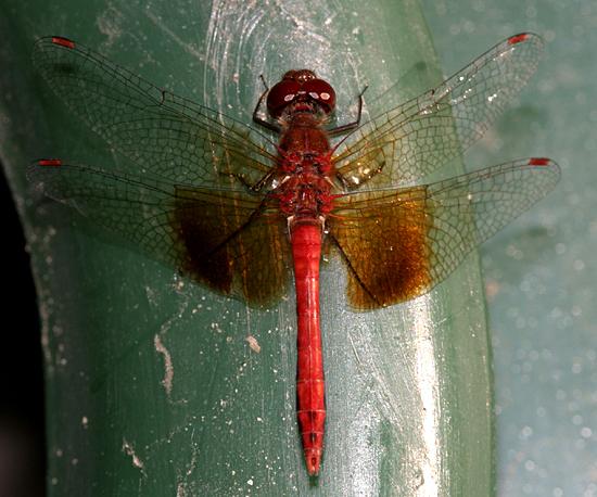 farmapest yusufçuk resimleri ile ilgili görsel sonucu