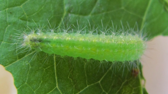 caterpillar - July 28