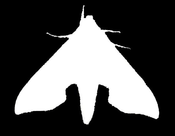 Sphinx Moth Silhouette