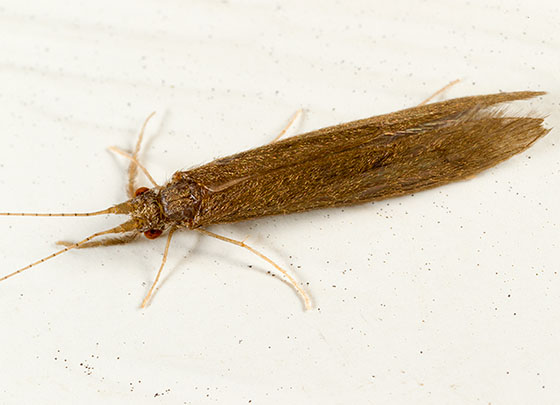 Caddis Fly I Think